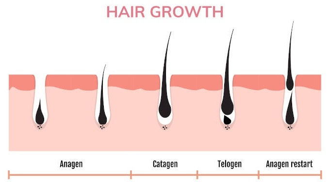 HairFortin Review - The Next Big Thing in Hair Growth?